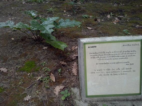 Wat is de acanthus? Vergilius vertelt erover in zijn 'Georgica'.