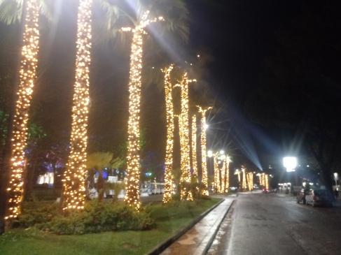 Verlichte palmen tijdens Gaeta's 'Luminarie'